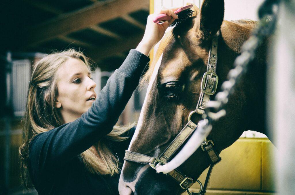 fjällstallet tjej borstar man på häst