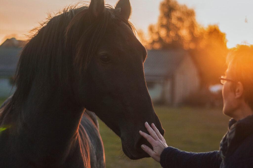 fjällstallet horsemanship